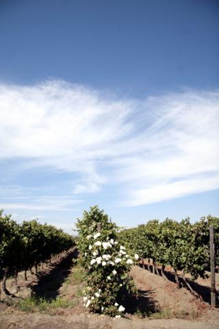 Aromo Wines