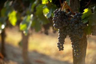 Wijnhuis Uitgelicht